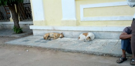 Dogs snoozing outside one of the main entrances to Mysore Medical College Hospital, where each day approx 50-60 individuals suffering from dog-bites come for treatment.